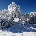 Mansfield and Mt Buller (120)